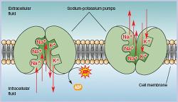 Fluid and Electrolyte Series: Balancing act Na+ Sodium K+