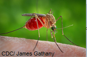 west-nile-virus.png