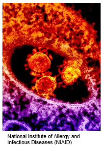 mers-3-(1).PNG