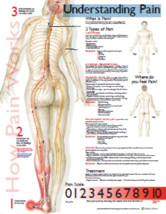 understanding_pain_chart.png